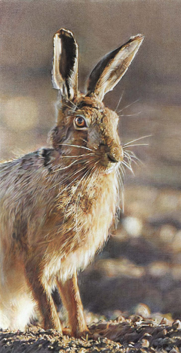 Waterloo Sunset - Hare by Denise Finney