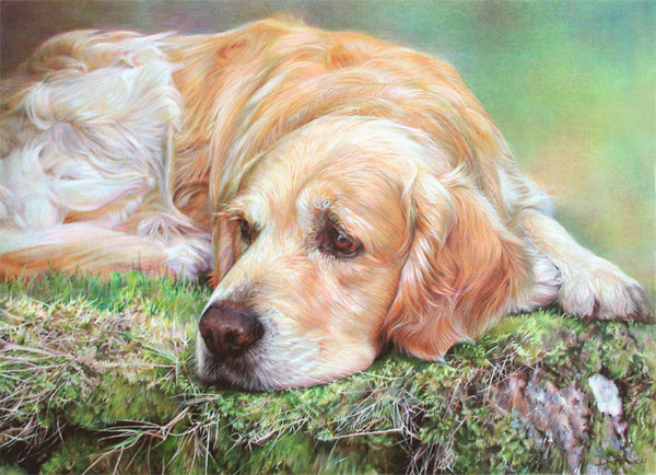 Golden Slumbers - Golden Retriever by Denise Finney