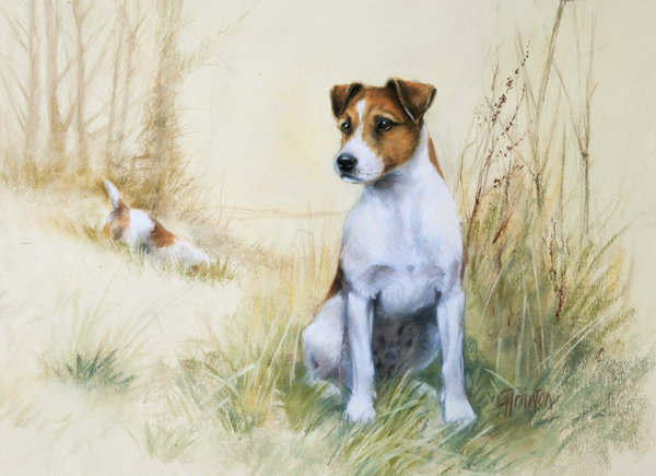 Smooth Haired Jack Russell by Gail Tointon