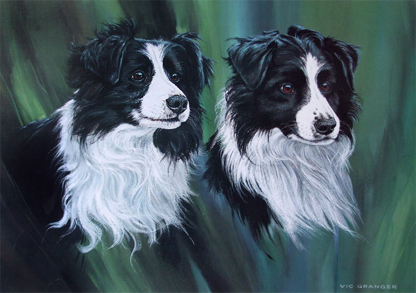Border Collie by Vic Granger