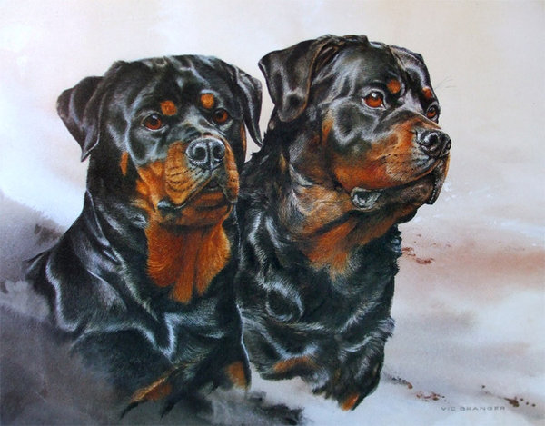 Rottweilers by Vic Granger