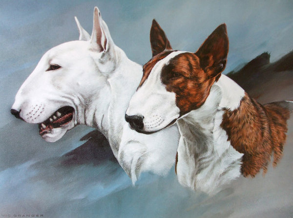 English Bull Terriers by Vic Granger
