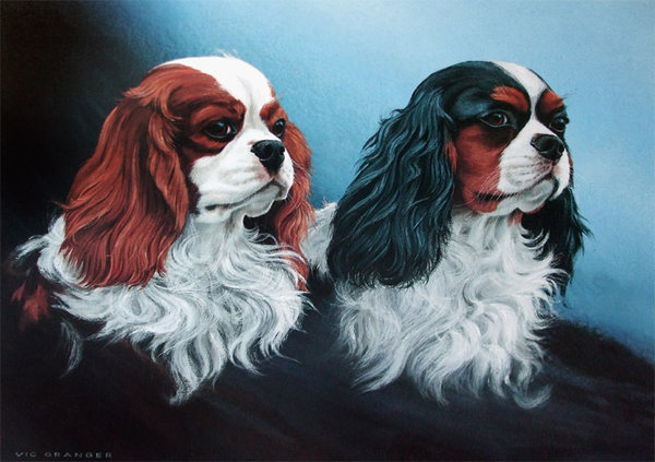 Cavalier King Charles by Vic Granger