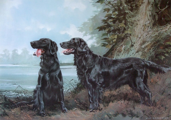 Flatcoat Retriever by Vic Granger