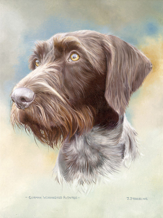 German Wire Haired Pointer - GWP by Joanna Stribbling