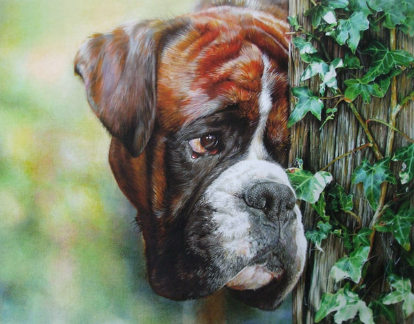 Boxed In - Boxer by Denise Finney