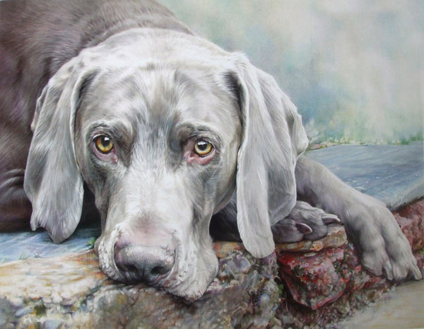 The Naughty Step - Weimaraner by Denise Finney