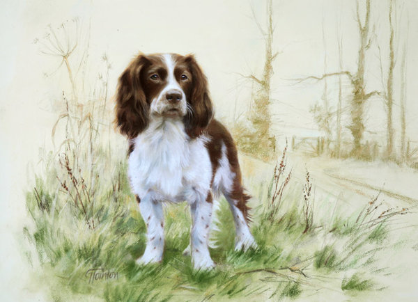 English Springer Spaniel by Gail Tointon